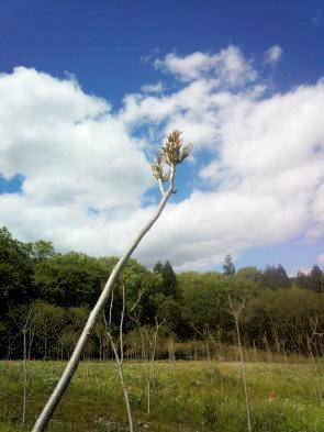苗木の木から芽が出る